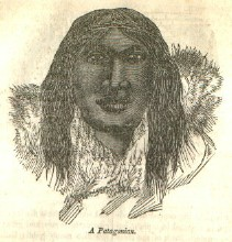 illustration of a Patagonian